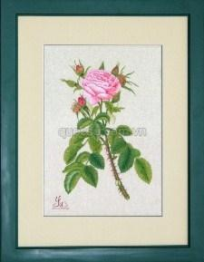 Hoa hồng gai - FL-045